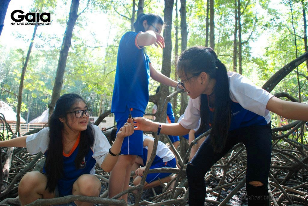 Tìm hiểu Ốc len trong rừng ngập mặn