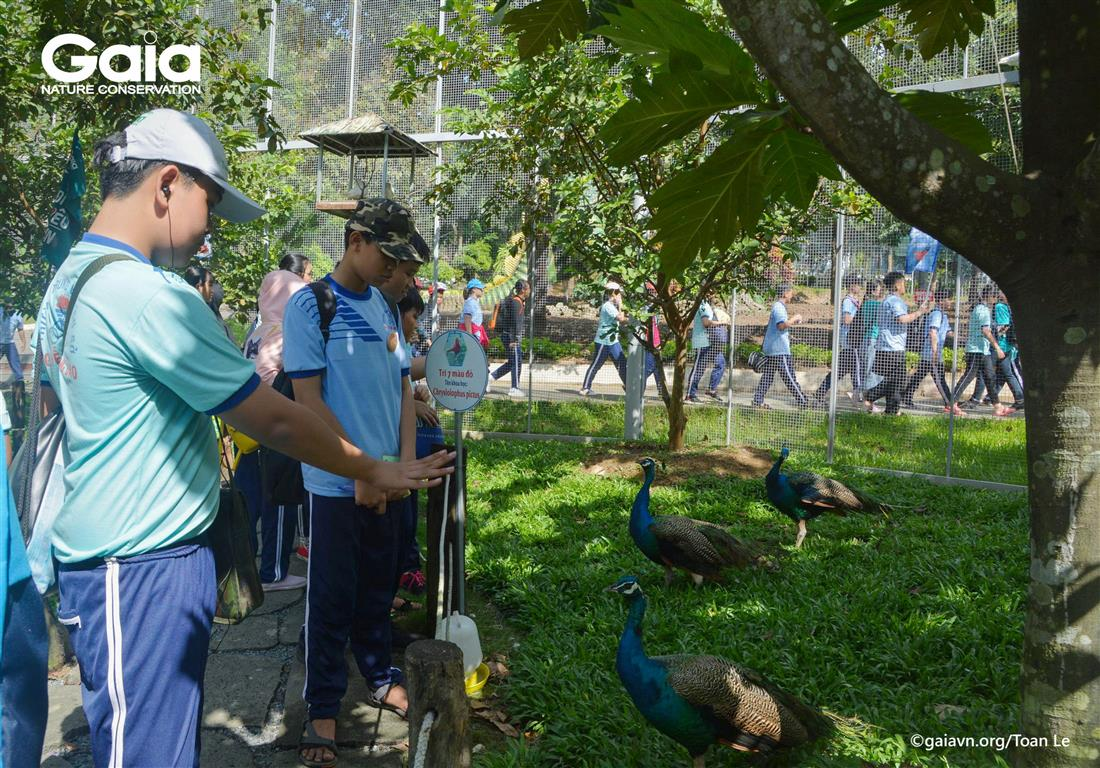 Tìm hiểu các loài chim quý hiếm trong Khu Vườn Chim