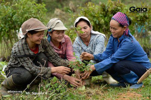 Người dân địa phương chính là lực lượng chính trồng rừng Xuân Liên 2021