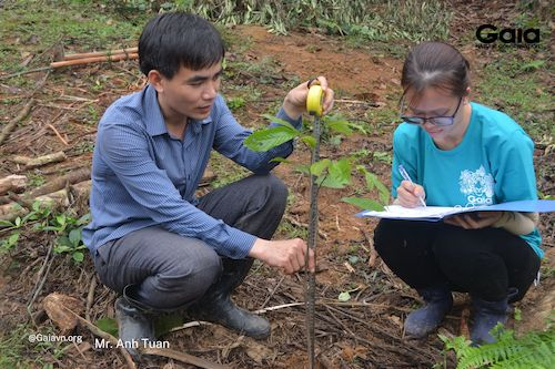 Cán bộ Gaia và Khu Bảo tồn Thiên nhiên Xuân Liên thực hiện giám sát cây sau khi trồng. Cây sẽ được chăm sóc và giám sát trong 4 năm liên tiếp.