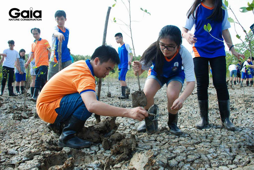 Giáo viên và học sinh trồng cây rừng ngập mặn