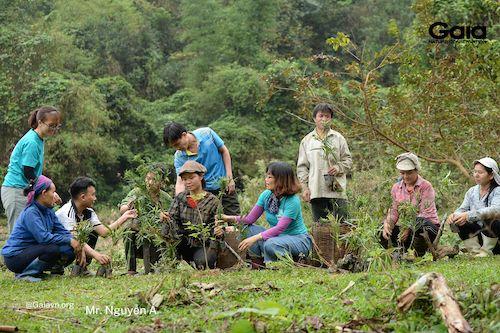 Người dân địa phương khẩn trương trồng rừng
