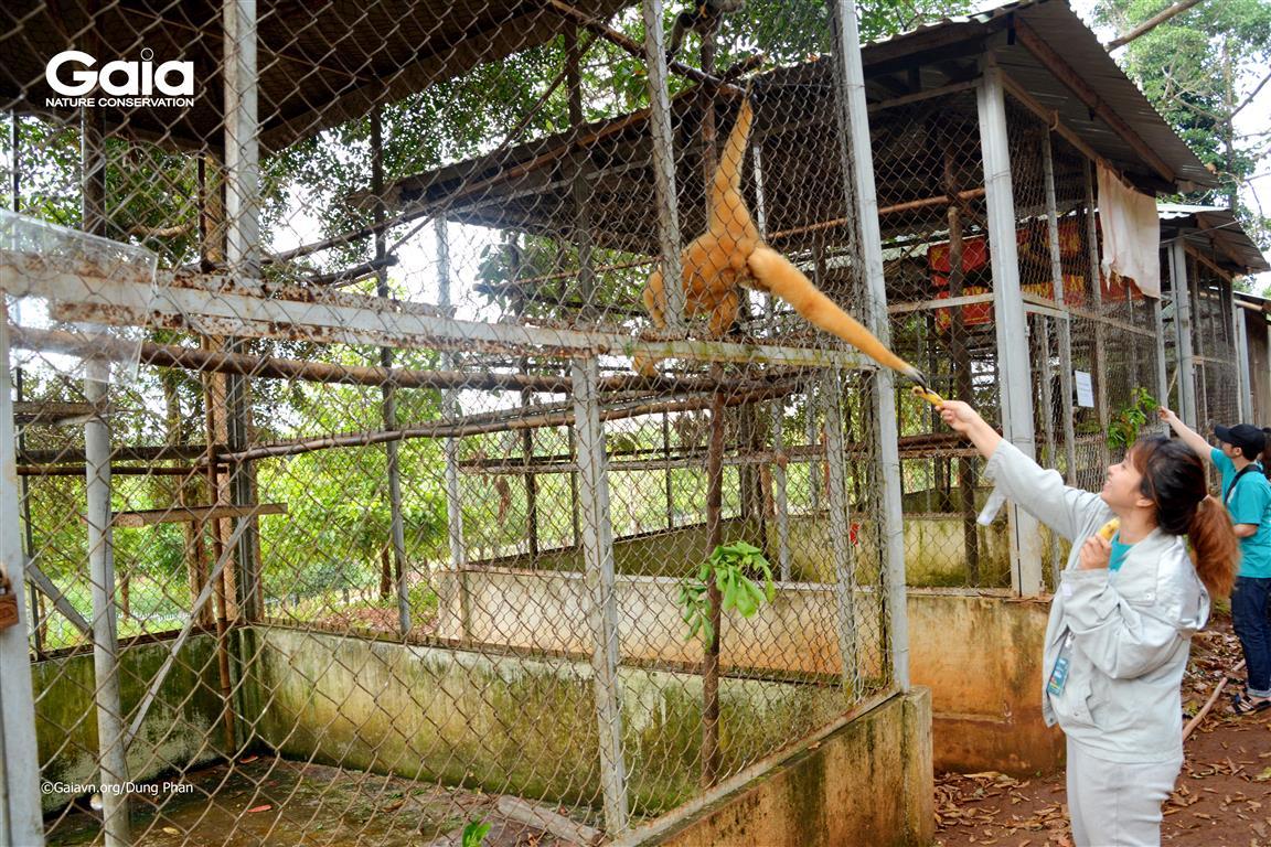 Cho linh trưởng ăn tại Khu cứu hộ Động vật hoang dã.