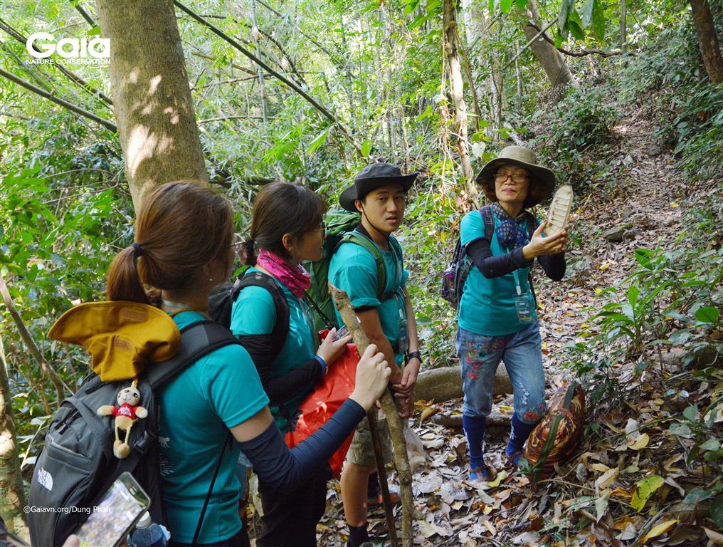 Bà Đỗ Thị Thanh Huyền – Nhà sang lập & Giám đốc Trung tâm Bảo tồn Thiên nhiên Gaia diễn giải về hạt gõ quý hiếm trong rừng nhiệt đới.