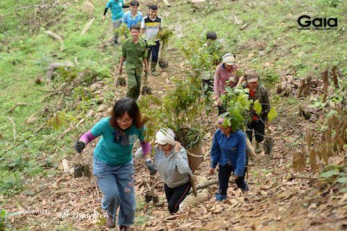 Khẩn trương đem cây giống vượt dốc đến các điểm trồng rừng