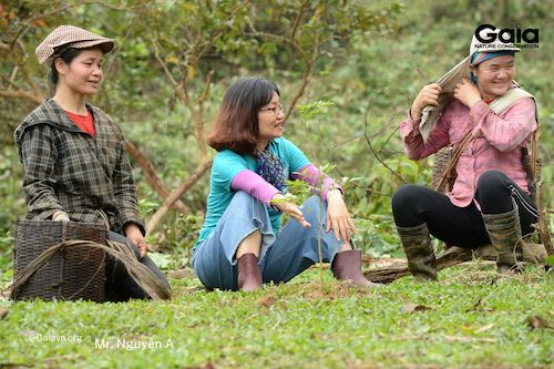 Mọi người trao đổi về đặc tính sinh trưởng của cây sưa và cách chăm sóc hiệu quả