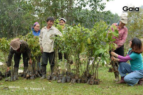 Chọn lọc cây giống để đảm bảo chất lượng trồng rừng