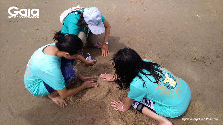 p rùa biển từ cát