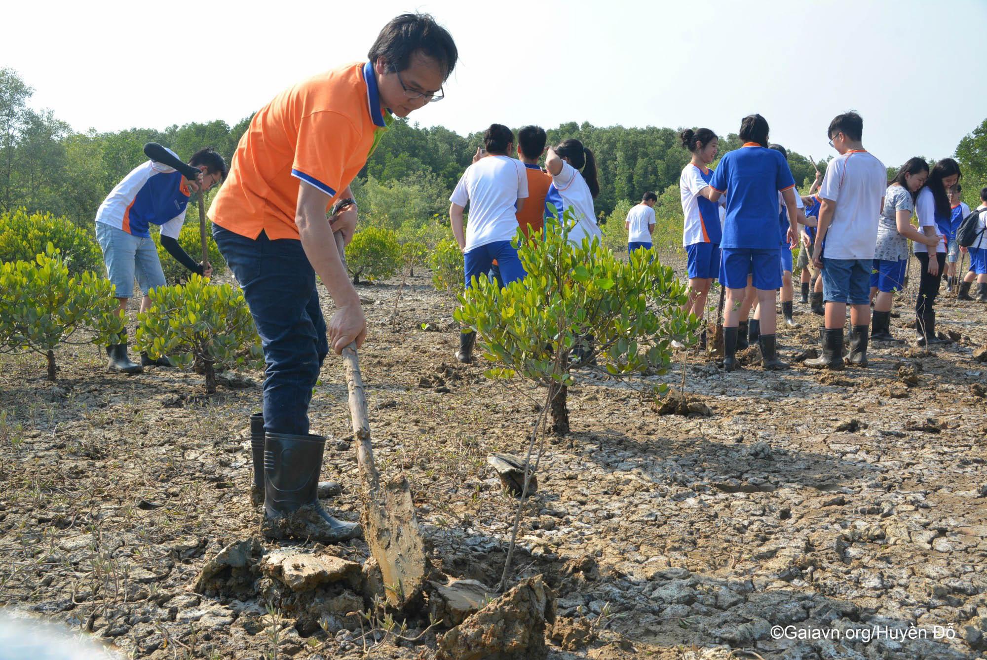 Thầy hiệu phó tích cực trồng rừng ngập mặn