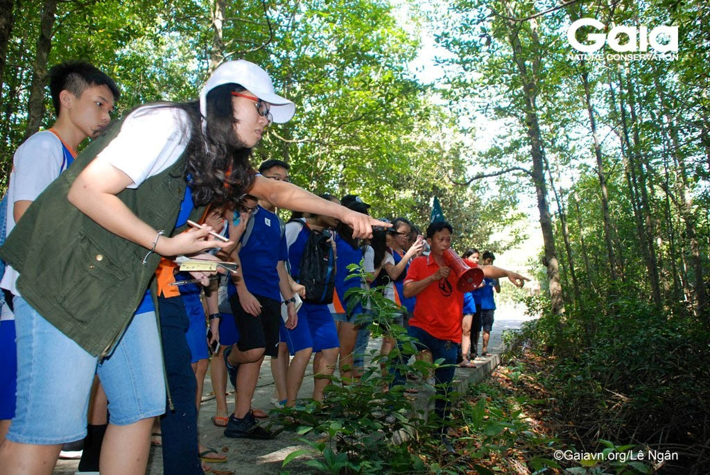Tìm hiểu cây Đước trong rừng ngập mặn