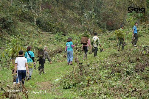 Mọi người hồ hởi nhận cây giống để vận chuyển đến địa điểm trồng