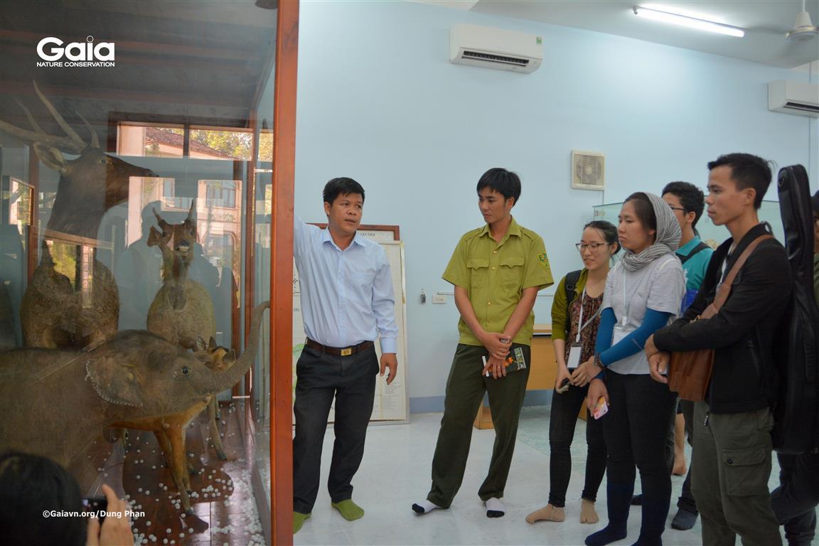 Lắng nghe câu chuyện chú voi tại phòng tiêu bản.