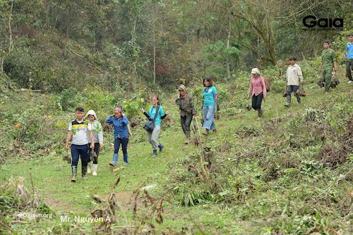Băng qua những con dốc để vận chuyển cây giống đến địa điểm trồng
