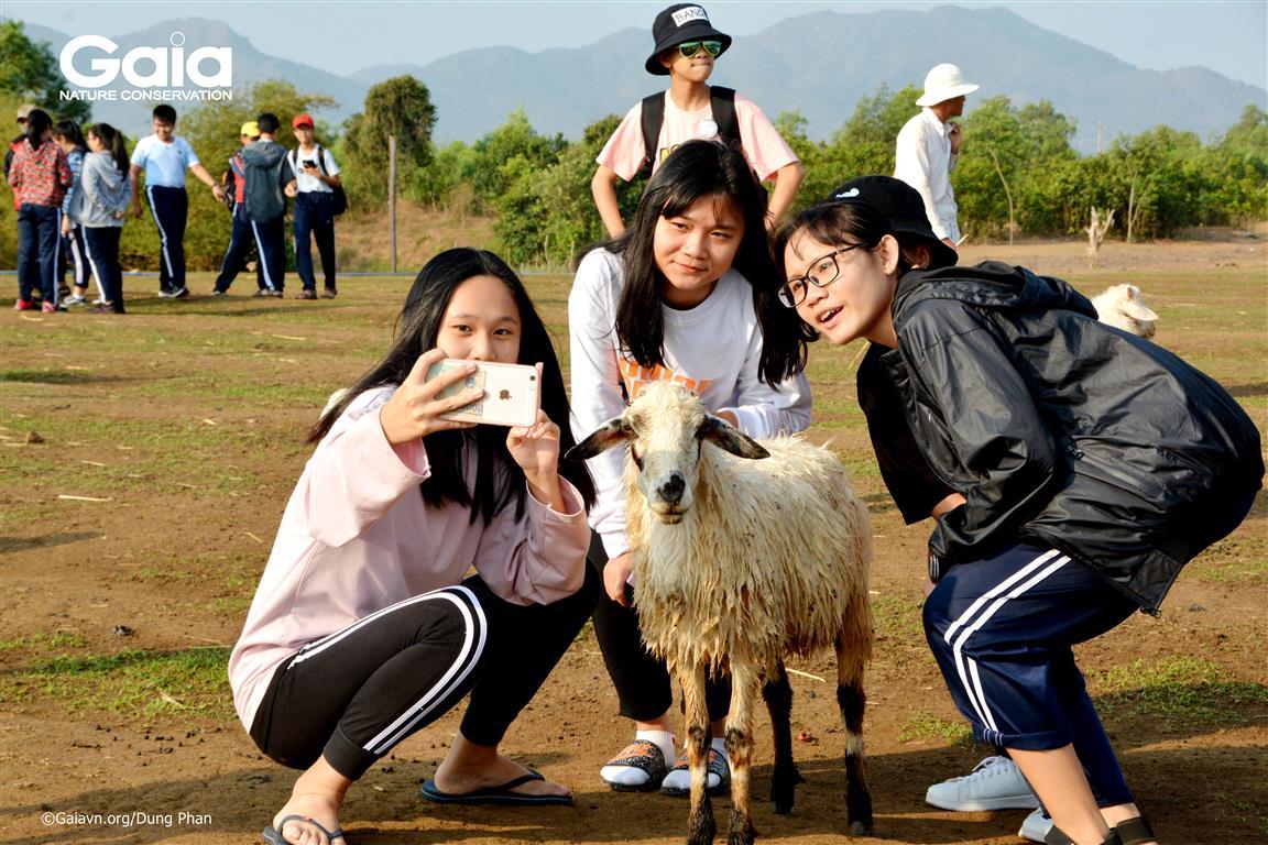Học sinh chụp ảnh với cừu.