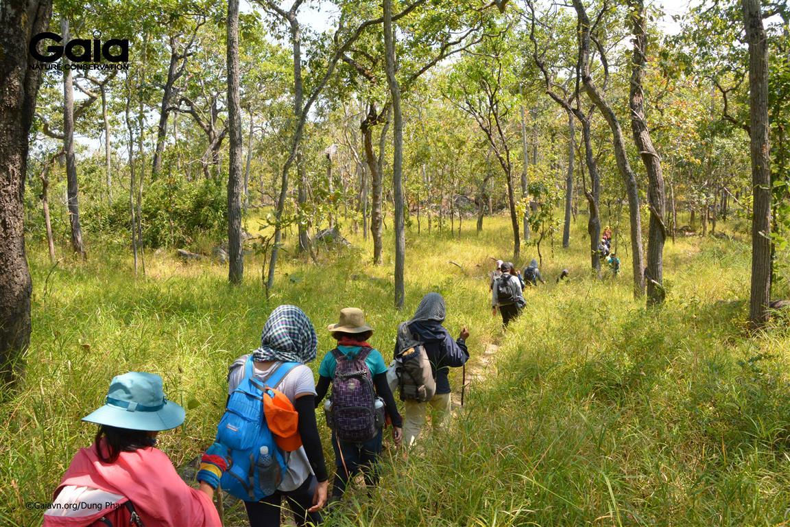 Chinh phục rừng khô với những bụi tre lùn.