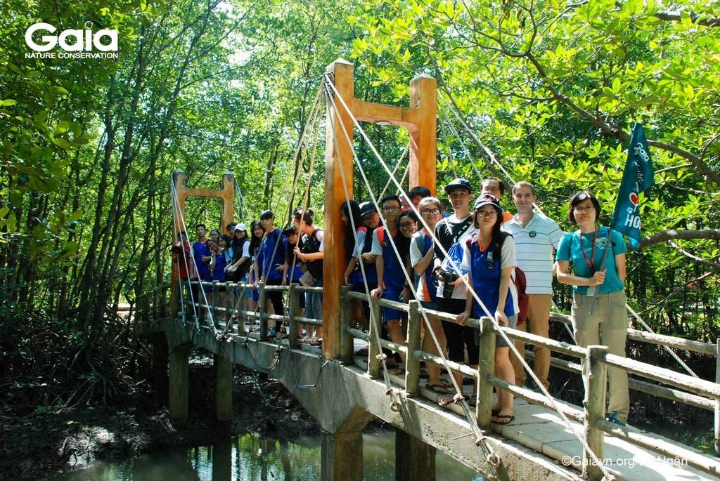 Chụp ảnh trên cây cầu giữa rừng Đước
