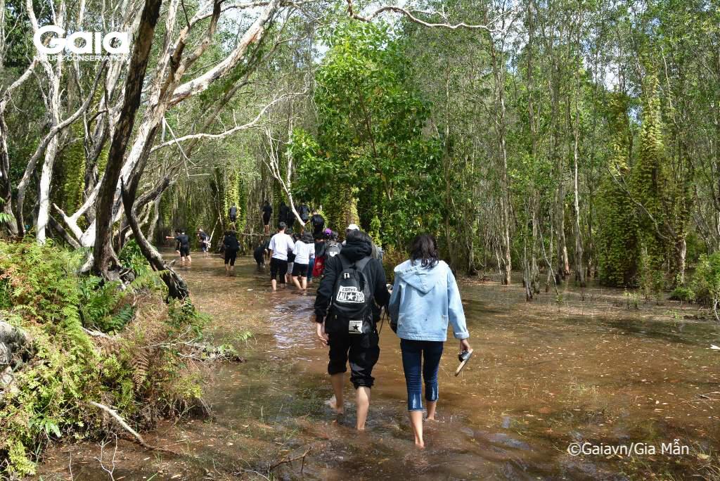 Học sinh thích thú lội nước tại Rừng tràm cổ thụ ngập nước.