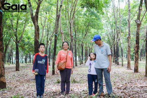 Gia đình cùng nhau đi dạo dưới rừng cao su
