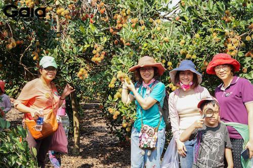 Hào hứng khám phá vườn chôm chôm