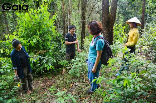 Giám sát khu rừng Xuân Liên
