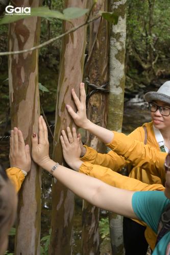 Học cách kết nối với rừng bằng mọi giác quan