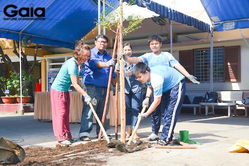 Trồng cây Bàng lá nhỏ trong khuôn viên trường