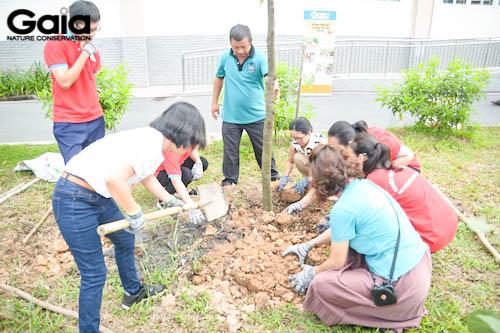 Giám đốc Gaia cùng trồng cây với các bạn học sinh