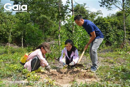 Cùng thầy cô giáo trồng cây bảo vệ voi.