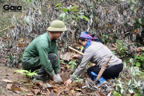 Người dân địa phương trồng rừng Xuân Liên