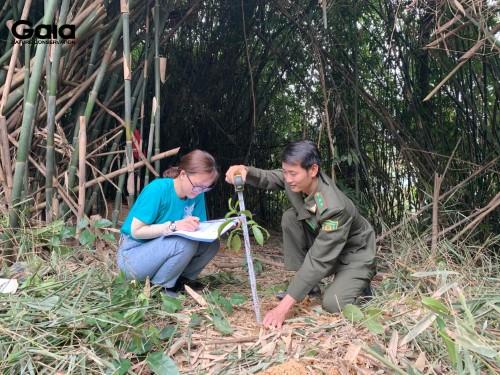Đo chiều cao cây làm cơ sở giám sát rừng Bến En trong thời gian tới