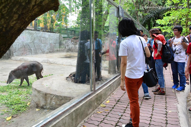 Tham quan và học tập về Lợn rừng