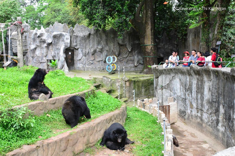 Tham quan và học tập về Gấu Ngựa