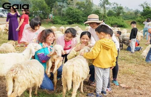 Hào hứng khám phá thú vị về loài cừu