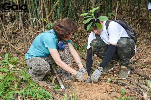 Jun Phạm gửi lời tích cực đến cây