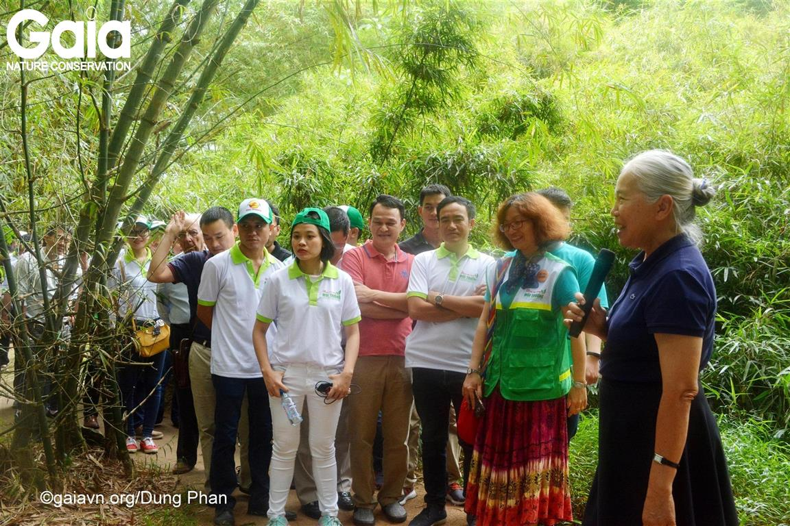 Tìm hiểu công tác bảo tồn tre tại Làng Tre Phú An.