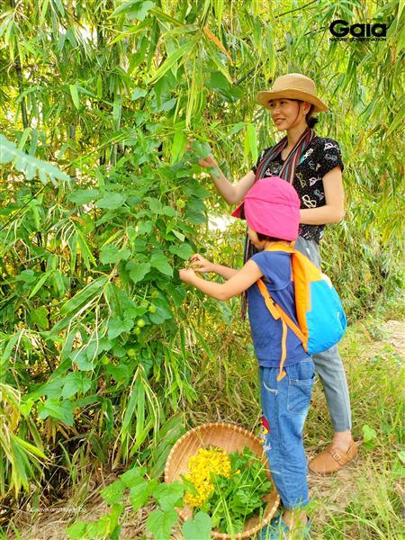 Trải nghiệm hái bông Điên điển (Sesbania sesban) – loài cây đặc trưng mùa nước nổi ở Miền Tây.