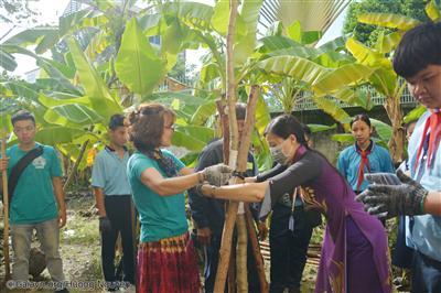 Thắt cây bằng bao bố để bảo vệ vỏ cây trước khi đóng cọc.