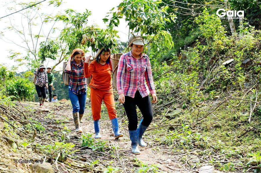 Khẩn trương vận chuyển cây đến điểm trồng rừng.