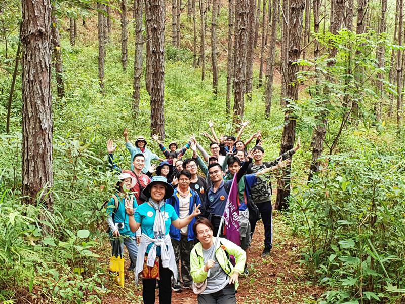 Hào hứng băng rừng thông.