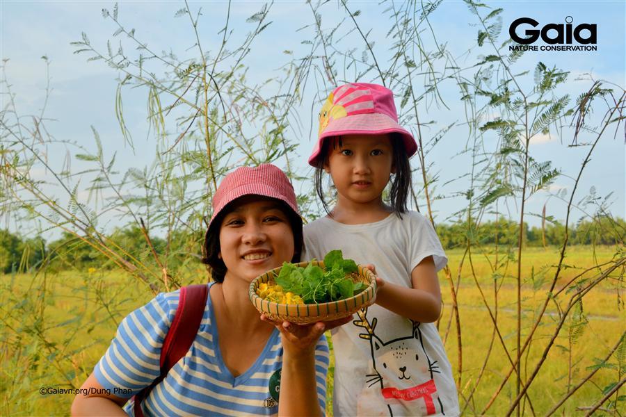 Trải nghiệm hái bông Điên điển (Sesbania sesban) – loài cây đặc trưng mùa nước nổi ở Miền Tây