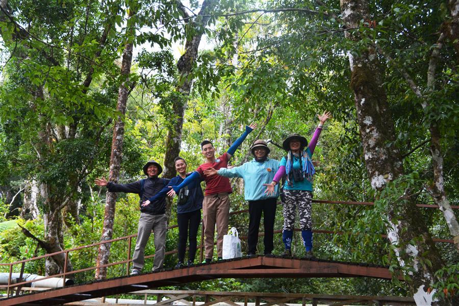 Hào hứng khám phá khu rừng cao đỉnh khí hậu.