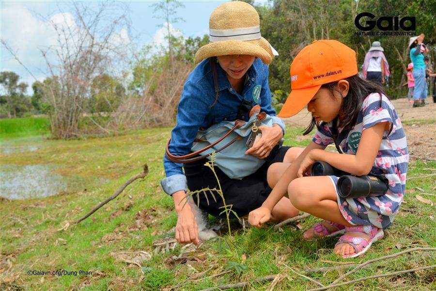Truy tìm cây mai dương – một loài ngoại lai gây hại.