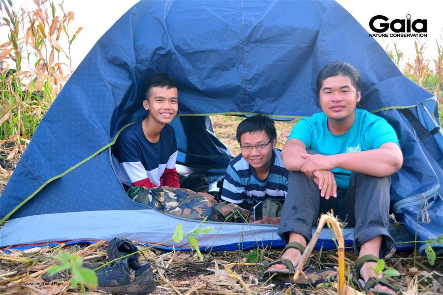 Cắm trại giữa cánh đồng ngô bạt ngàn.