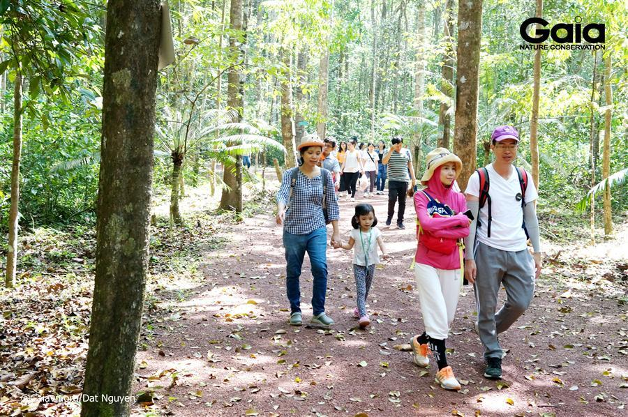 Băng rừng nhiệt đới.
