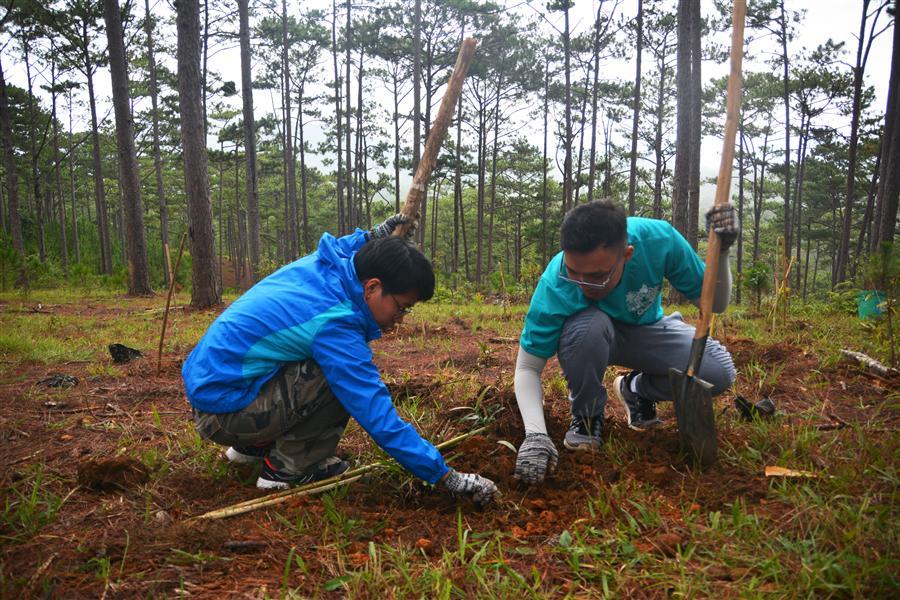 Hào hứng trồng rừng Sẻ thông họng vàng.