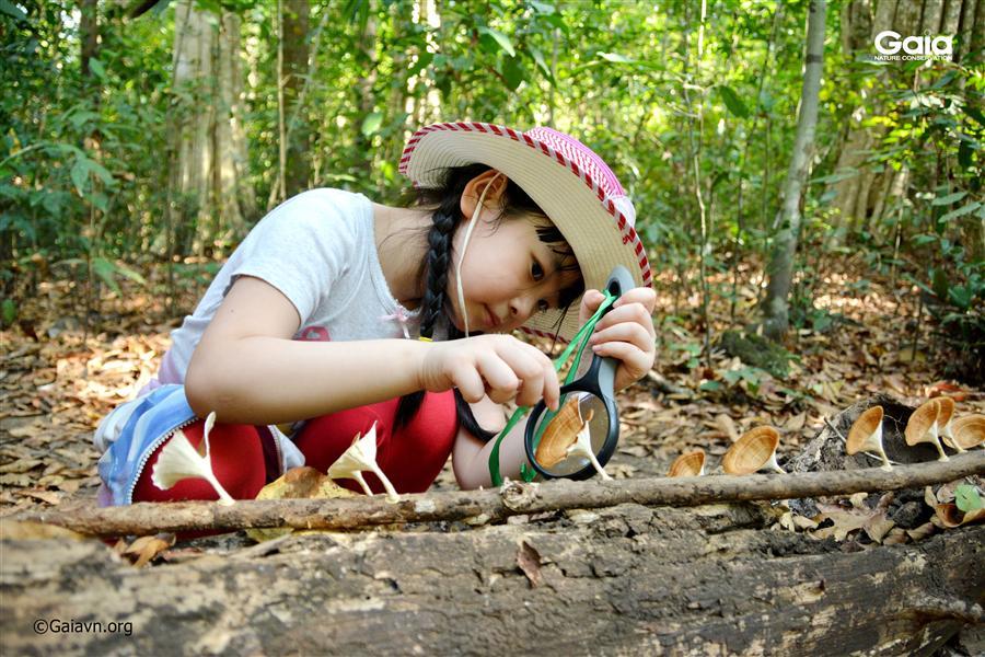 Nghiên cứu nấm và các tạo vật nhỏ bé trong rừng.