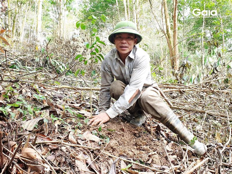 Trồng cây làm giàu rừng.