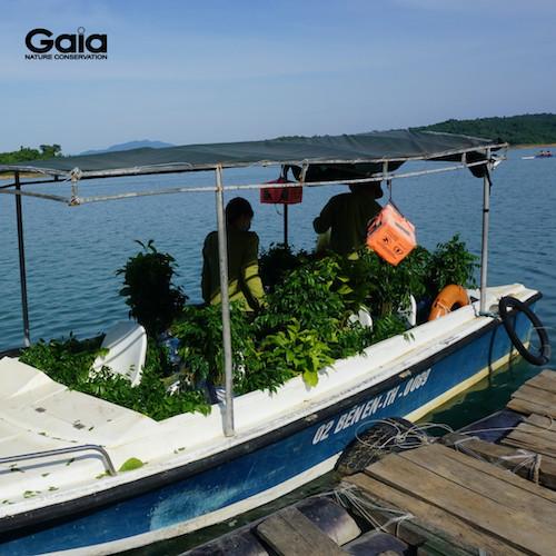 Cây giống được Cán bộ Vườn Quốc gia Bến En chuyển xuống thuyền trước khi chuyển đến nơi trồng.