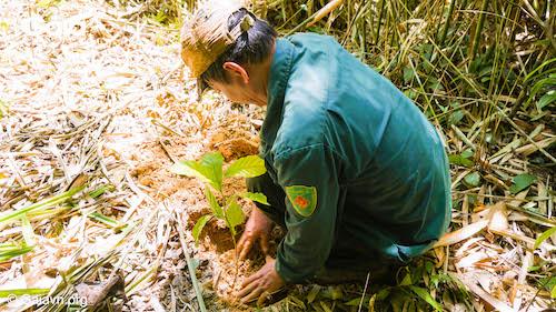 Trồng rừng chính là một trong những cách gia tăng sức khoẻ