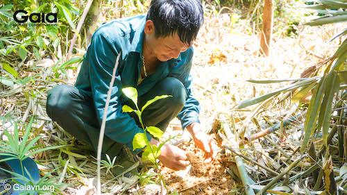 Niềm vui của người trồng rừng